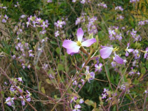 Flores4