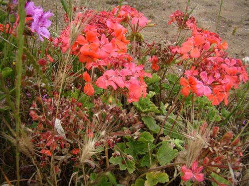 flores11
