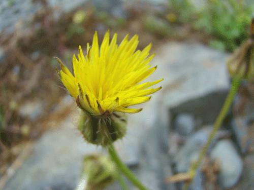 flores31