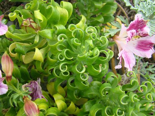 flores32