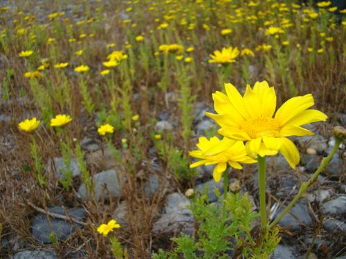 flores34