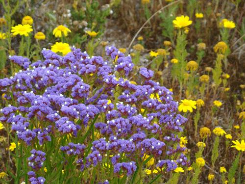 flores36