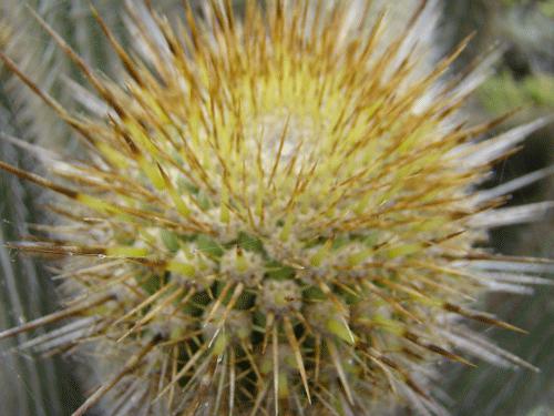 flores43