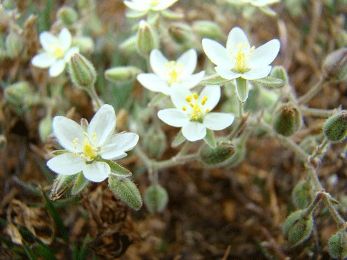 flores45