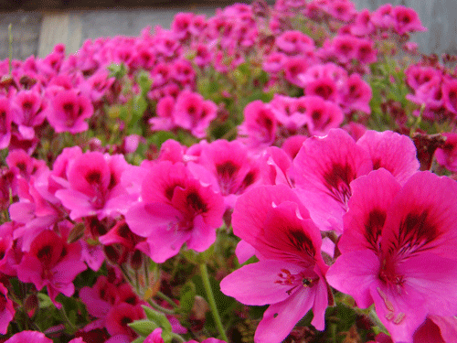 flores48