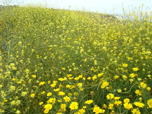 flores54