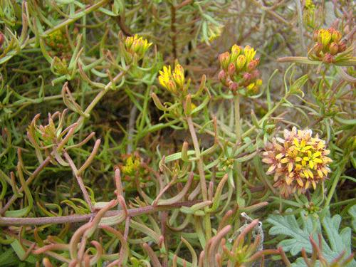 flores60