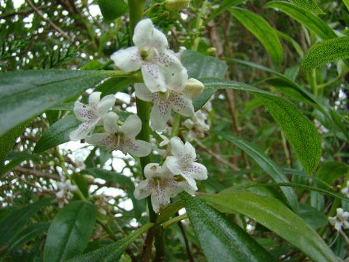 flores64