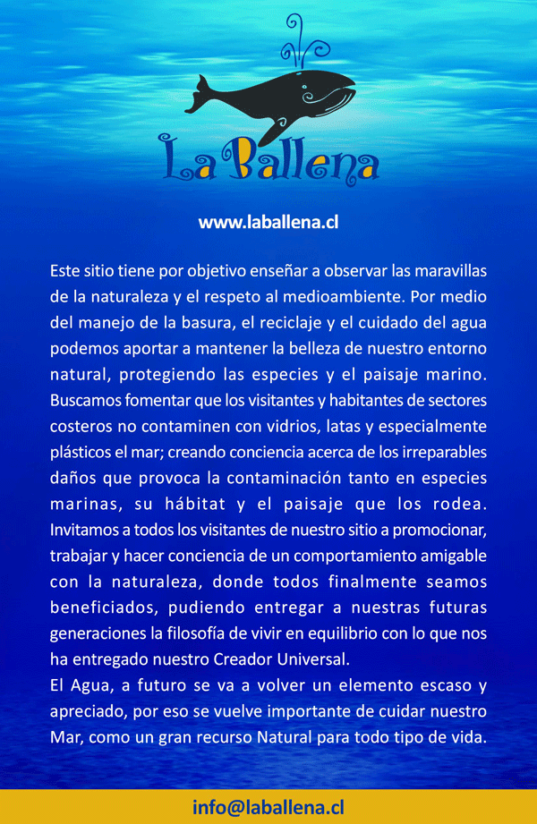 www.laballena.cl-1-600